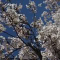 写真: 春空