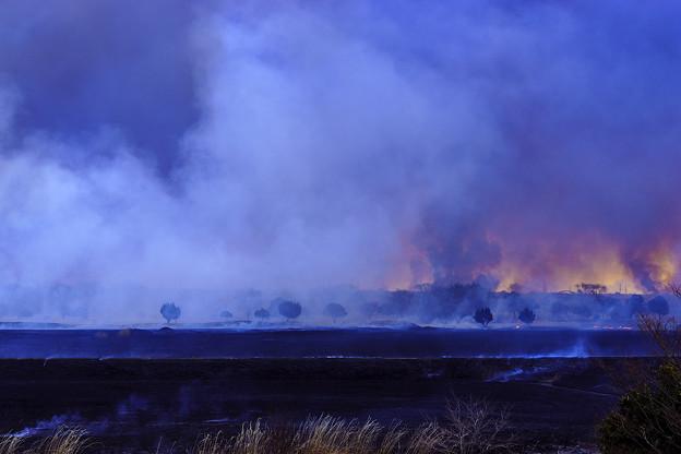 写真: 焼け野原に・・・