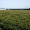 Photos: 6/1麦畑