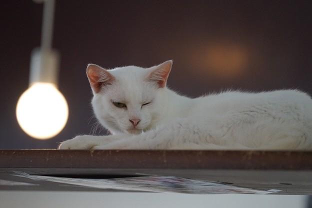 写真: 睨まれる(猫バージョン)