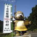 写真: タヌキ