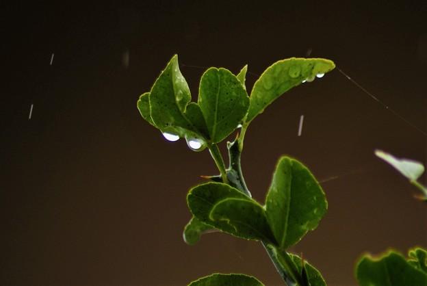 今日は雨ー2