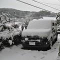 写真: 雪が降りました-1