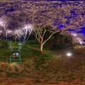 はままつフラワーパーク 夜桜 360度パノラマ写真(1) HDR