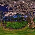 はままつフラワーパーク 夜桜 360度パノラマ写真(6) HDR