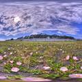 大浜海岸 ハマヒルガオ 360度パノラマ写真 HDR