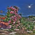島田ばらの丘公園 360度パノラマ写真(2) HDR
