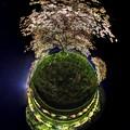みなみの桜 夜桜  Little Planet  (南伊豆町下賀茂温泉)
