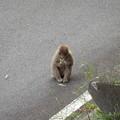 下りたところで猿が待ち構えていましたが(笑