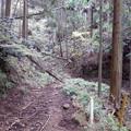 倒木が道をふさぐ・・・(林道唐沢線に沿った林道)