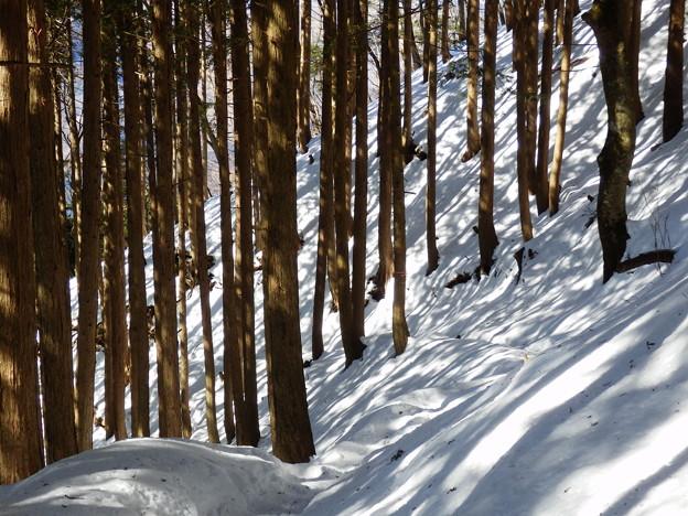 雪景色は綺麗っす^^