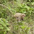あちこちに いっぱい猿w