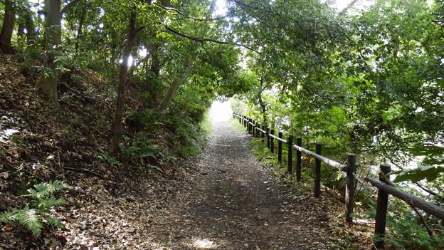 聖マリアンナ病院側からの車道と別れすぐに森林に突入!