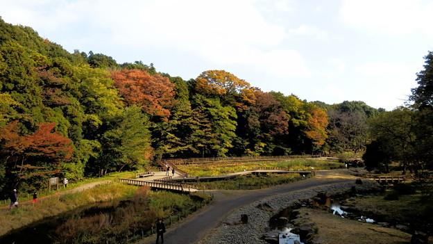 吊り橋の上からの景色