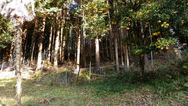 いい感じの鹿柵の扉を発見♪
