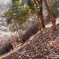 Photos: 左斜面は落ち葉の天然すべり台w