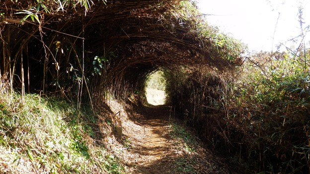 帰りはこの笹のトンネルを抜ければ早かったのだが
