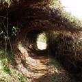 Photos: 帰りはこの笹のトンネルを抜ければ早かったのだが