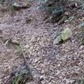 落石で埋まってる所はロープ!