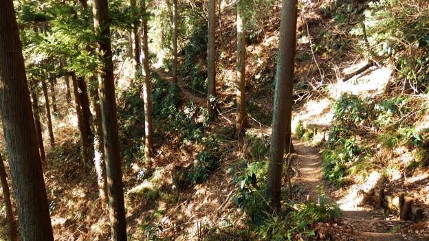 気持ちのよい木漏れ日の当たる登山道