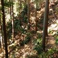 Photos: 気持ちのよい木漏れ日の当たる登山道