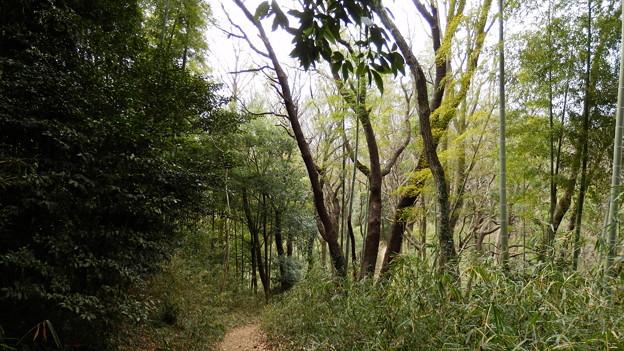 寺家ふるさとの森も緑が少しづつ濃くなって