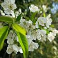 Photos: 桜の次に