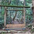 Photos: 入らずの森