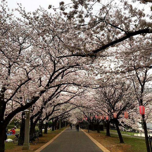 150401 辰巳の森緑道公園