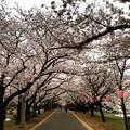 写真: 150401 辰巳の森緑道公園