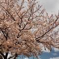 写真: 150402 真光寺川