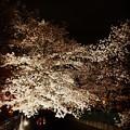 写真: 150402 麻生川