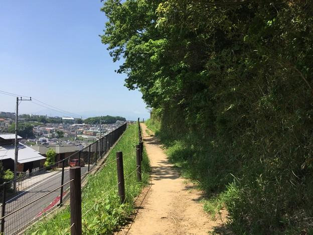 150502 鶴川台尾根緑地