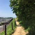 写真: 150502 鶴川台尾根緑地