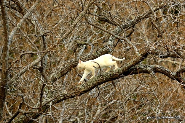 Photos: 木登り猫