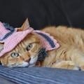 Photos: ハロウィンハットとケープを着けた恵子