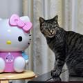 写真: 猫はキティちゃんの加湿器が好き!