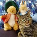 写真: うさぎと猫