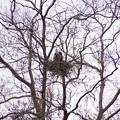 樹上の巣 大阪/住吉公園