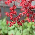 Photos: どんな不精な庭にも花咲く季節の到来です♪♪