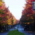 写真: 落ち葉の量がすごくなってました
