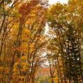 紅葉の高木