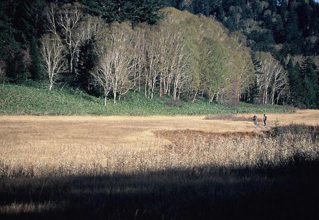 湿原をゆく