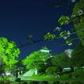 写真: 八重桜を眺めながら思う、地球には美しいお花と渋い建築物がある、人類の誇り