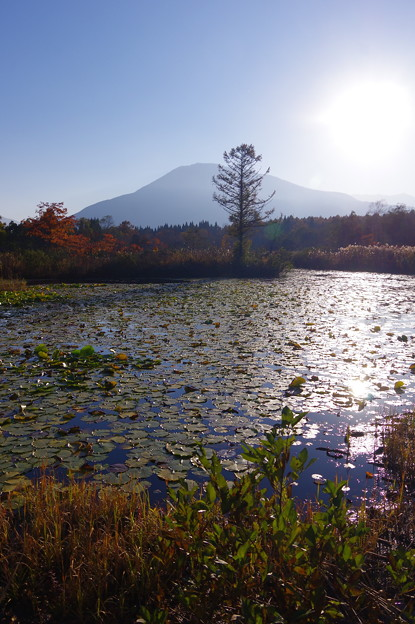 蓮の葉のいもり池