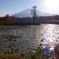 Photos: 蓮の葉のいもり池
