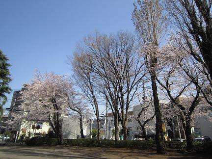 多摩平第7公園の桜 2