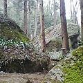 写真: 石老山に久しぶりに来ました。苔岩で有名ですがこの所の乾燥で苔が枯...
