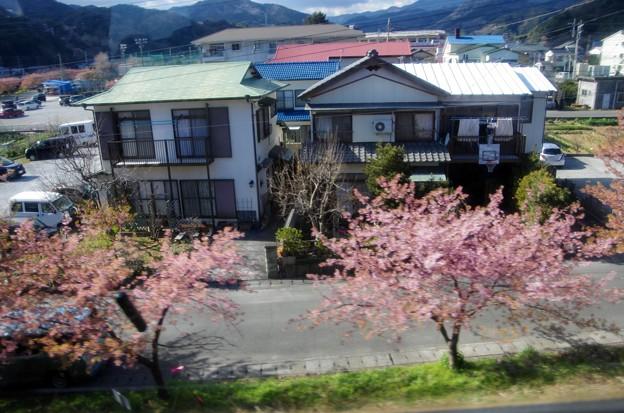 写真00027 河津の駅で、わずかに残る桜