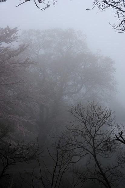写真00057 とにかく霧で見えません
